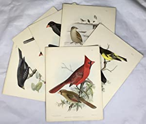6 Hand Coloured Lithograph Plates [from Part 2 of ?A Monograph of the Weaver-Birds, Ploceidae, an...