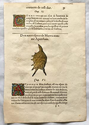 Whelk Shell. One Leaf with 3 Hand Coloured Woodcuts & 3 Illuminated Initials. [La première (& sec...