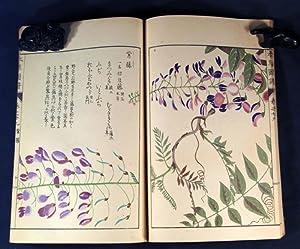 HONSÔ ZUFU: EHON - BOTANICAL] Iwasaki Tsunemasa