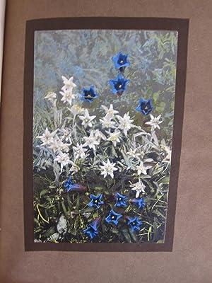 Alpine Flowers and Rock Gardens: Walter P. Wright