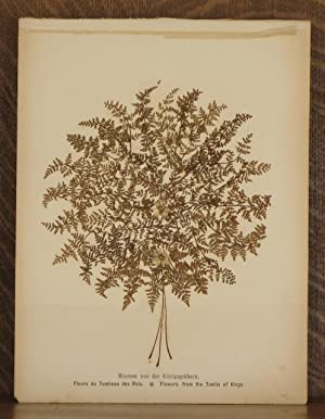 BLUMEN AUS DEM HEILEGEN LANDE, FLOWERS OF THE HOLY LAND: anonymous