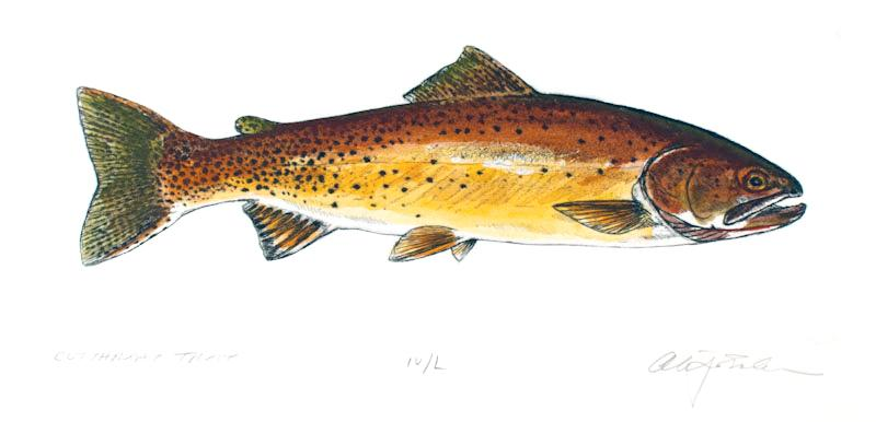 Trout & Bass: Bodio, Stephen