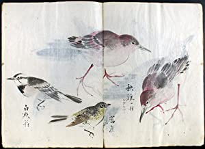 The Various Birds: Fifty-six Varieties. The Color of the Bird, Shape of the Body