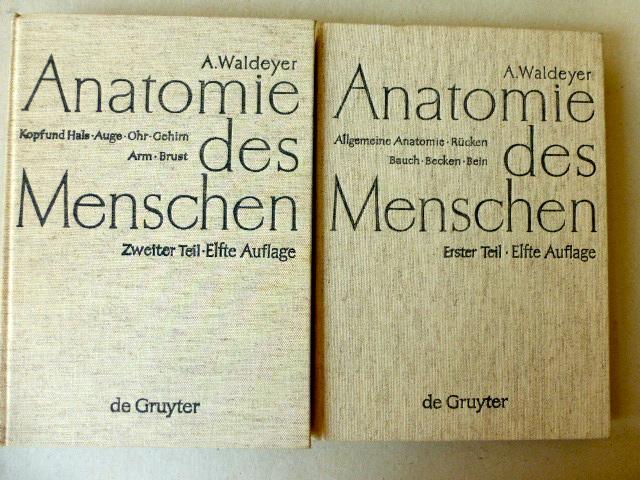 Anatomie des Menschen für Studierende und Ärzte,: Waldeyer, A.: