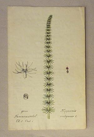 Sammlung von Schweizer Pflanzen nach der Natur: Botanik - Hegetschweiler,