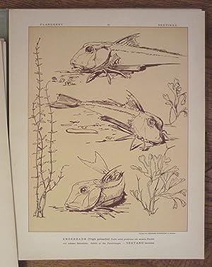 Fische und Seetiere. Naturstudien für das Kunstgewerbe.: Fische - Flanderky, Paul (Illustr.).