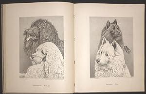 Illustriertes Muster Hunde-Buch. Studien rassereiner Hunde. Blätter für Züchter, ...