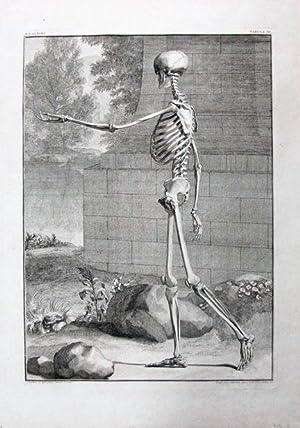 A Single Plate, Tabula III from Tabulae: Anatomy; Medicine; Anatomical