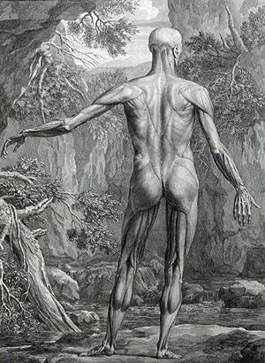 A Single Plate, Musculorum Tabula V from: Anatomy; Medicine; Anatomical