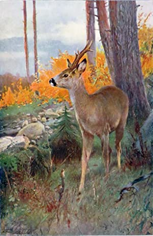 WILD LIFE OF THE WORLD: A Descriptive Survey of the Geographical Distribution of Animals: Lydekker ...