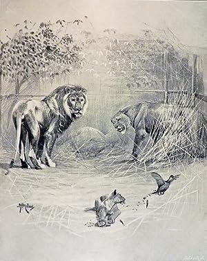 BREATH FROM THE VELDT: Millais John Guille