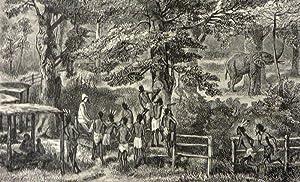 AFRICAN SKETCH-BOOK: Reade Winwood