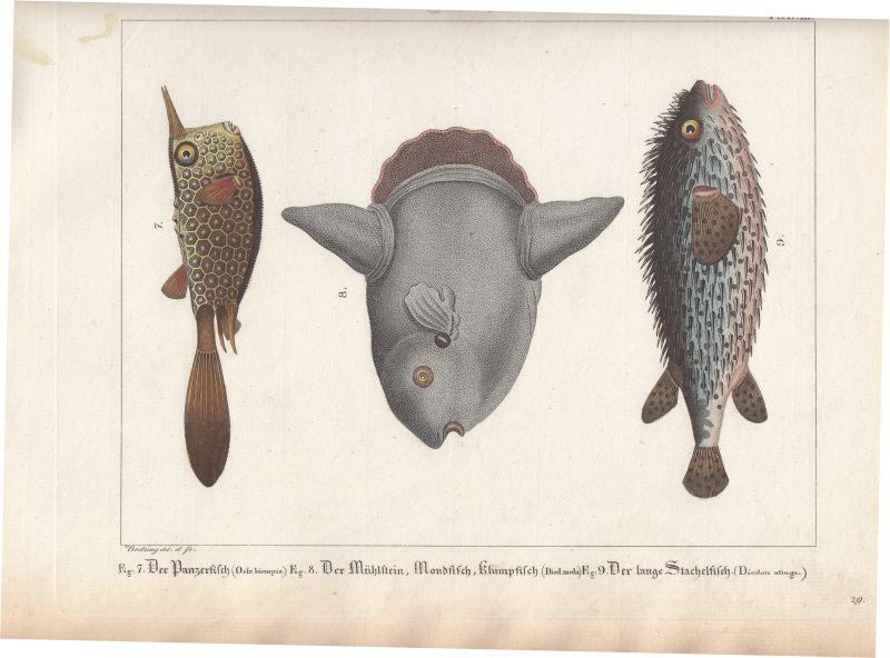 Naturgeschichte der Fische - ZVAB