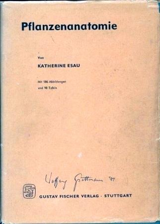 Pflanzenanatomie von Esau,Katherine: - Clivia Mueller