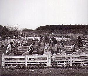 H. G. OLDS. Fotografías. 1900 - 1943: Olds, H. G.
