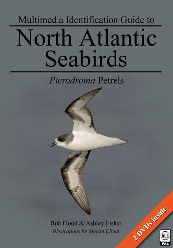 Multimedia Identification Guide to North Atlantic Seabirds: Pterodroma Petrels: Flood, Bob, and ...