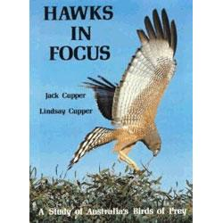 Hawks in Focus: A Study of Australia's Birds of Prey: Cupper, Jack; Cupper, Lindsay