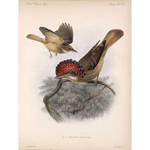Biologia Centrali-Americana: Aves. Set of Volumes I-IV: SALVIN, Osbert; Frederick