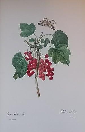 Fleurs et fruits.: REDOUTE (Pierre-Joseph)