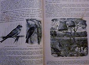 STORIA ILLUSTRATA DEL REGNO ANIMALE Secondo l'Opera: Michele Lessona e