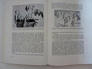 MANUALE DI PATOLOGIA VEGETALE - Volume Terzo.: G. Goiadanich
