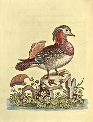 Histoire naturelle d'oiseaux peu communs: et d'autres: EDWARDS, George