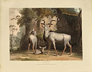 African scenery and animals: DANIELL, Samuel