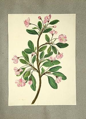 Fleurs peintes à l'aquarelle.: GRENIER, Charlotte