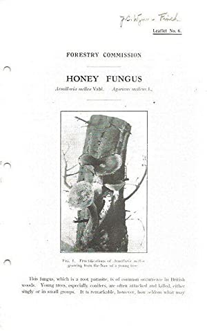 Honey Fungus. Forestry Commission Leaflet No. 6.: Forestry Commission.