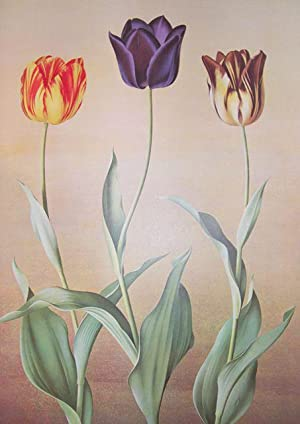 Flora Magnifica. Selected and painted by the: Jones, P.