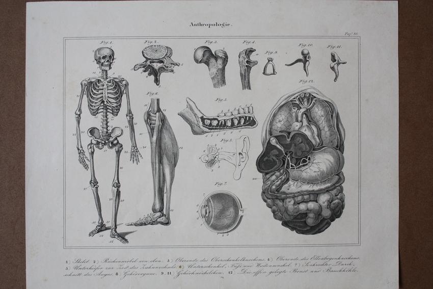anatomie auge des - ZVAB
