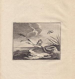 Schmetterling, schöner Kupferstich um 1783 mit Darstellung zweier Exemplare in der Natur, ...