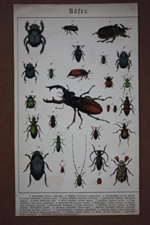 Käfer, altkolorierter Stahlstich mit Abbildungen von 27 Käfern und der Legende dazu, ...