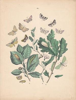Schmettlinge, Puppen, Raupen auf Pflanzen, altkolorierte Lithographie um 1875 von Emil Hochdanz, ...