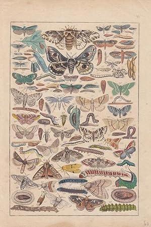 Raupen, Falter und ihre Entwicklungsstadien, Holzstich um 1880 mit einer Vielzahl an Darstellungen,...