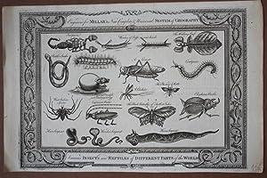 Insekten und Reptilien, großformatiger Kupferstich mit schönem Schmuckrand aus dem Jahr ...