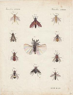 Insekten LXXXVII - Fliegen, altkolorierter Kupferstich um 1820, Blattgröße: 25,5 x 20 cm...