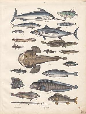 Fische, Altkolorierte Lithographie um 1875 von Emil Hochdanz mit einer Vielzahl an Fischen, Blattgr...