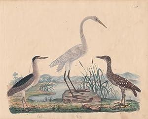 Reiher, altkolorierte Lithographie um 1828 mit drei Vögeln, Blattgröße: 19,5 x 24 ...