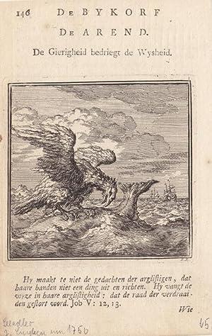 Seeadler, kleinformatiger Kupferstich um 1850 von J. Luyken, Blattgröße: 15,2 x 9,8 cm, ...