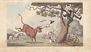 Dr. Syntax pursued by a bull, altkolorierte Aquatinta um 1815 von Rowlandson, Blattgröße: 13 x 22...