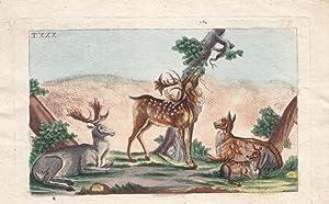 Reh, Hirsch, Rotwild, Damwild, handkolorierter Kupferstich um 1830, Blattgröße: 11,5 x ...