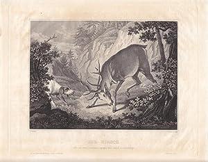 Der Hirsch wie er sich, ermüdet, gegen den Hund vertheidigt, Stahlstich um 1840 von J. Stebert...