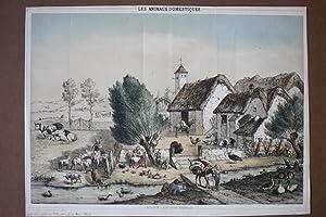 Les Animaux Domestiques, Bauernhof, Rinder, Schafe, Esel, altkolorierte getönte Lithographie ...