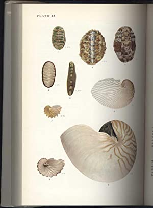 Shells of the Western Pacific in Color, Vol. I and Vol. II: Kira, Tetsuaki