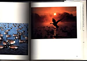 The Geese of Silver Lake (SIGNED): Blacklock, Craig