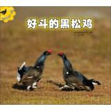 Animal Constellation Series: aggressive black grouse(Chinese Edition): REN REN
