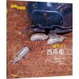 The story of life: born! Watermelon worm(Chinese Edition): RI ] XIAO SHAN MEI YE LI