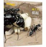 The story of life: born! Ant(Chinese Edition): RI ] XIAO SHAN MEI YE LI