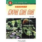 Experts teach you the kinds of vegetables - chayote squash white melon - Guangdong Farm House ...